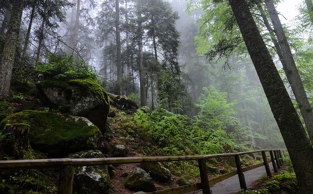 les, mlha, cesta