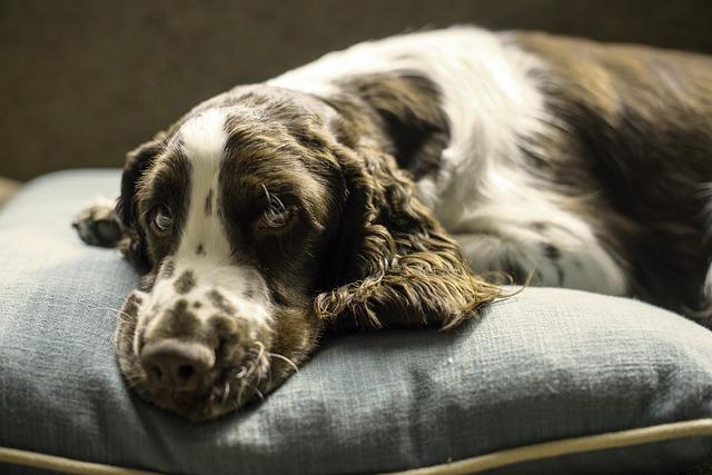 Konec tabu: psí inkontinenční pomůcky