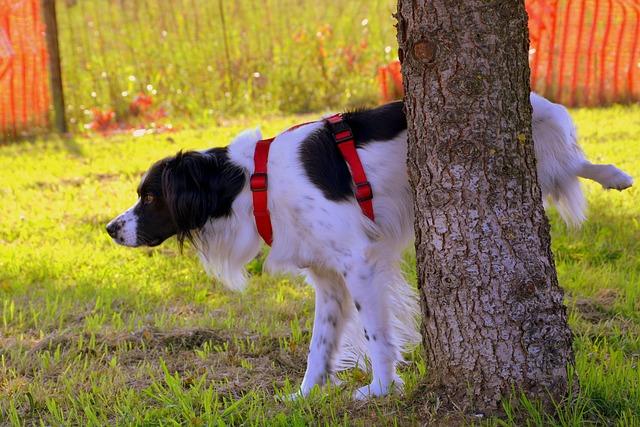 pes značkuje strom