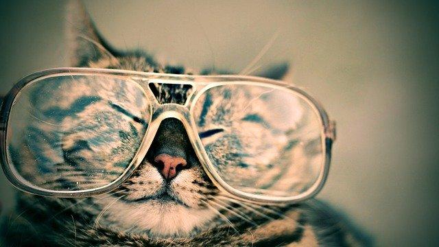 kočka s brýlemi